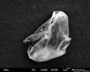 alien espace stratosphere decouverte extratereste microbe