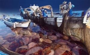invasion meduse
