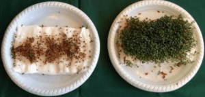 graine plante wifi probleme pousse