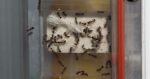 fourmis dans espace iss nasa