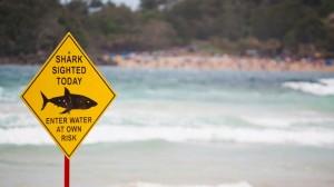 requin-twitter-attaque-prevention