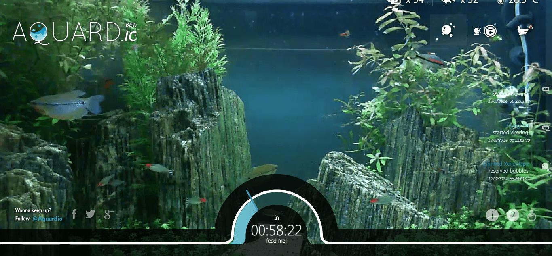 un site internet pour nourrir des poissons dans un aquarium geek et bio. Black Bedroom Furniture Sets. Home Design Ideas