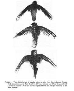 centrale electrique solaire Californie rayon de la mort miroir oiseaux