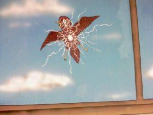 oiseau fenetre vitre crash