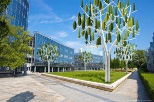 arbre-a-vent-ecologie