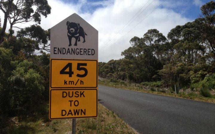 panneau diable tasmanie