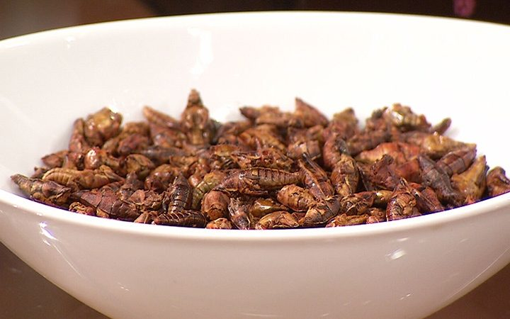bol-insectes