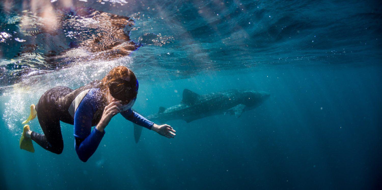 plongé avec les requins baleine