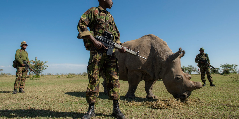 militaire garde un rhinocéros