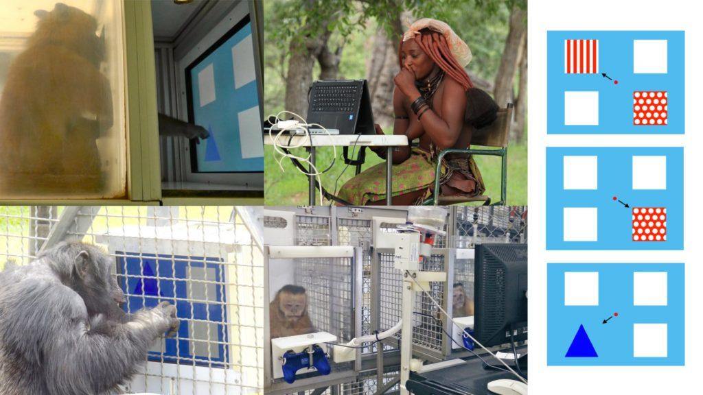 test singe et humain