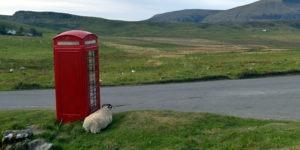 Mouton devant une cabine téléphonique en Ecosse