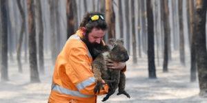 koala avec un pompier incendie australie
